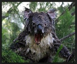 drop bear australia australian humor humour
